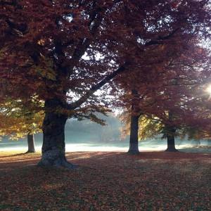 #autumnisok